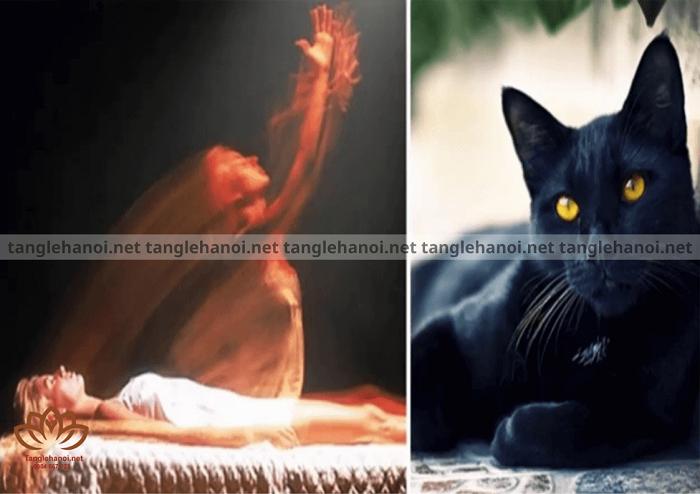 Không nên để mèo đực nhảy qua xác chết và quan tài